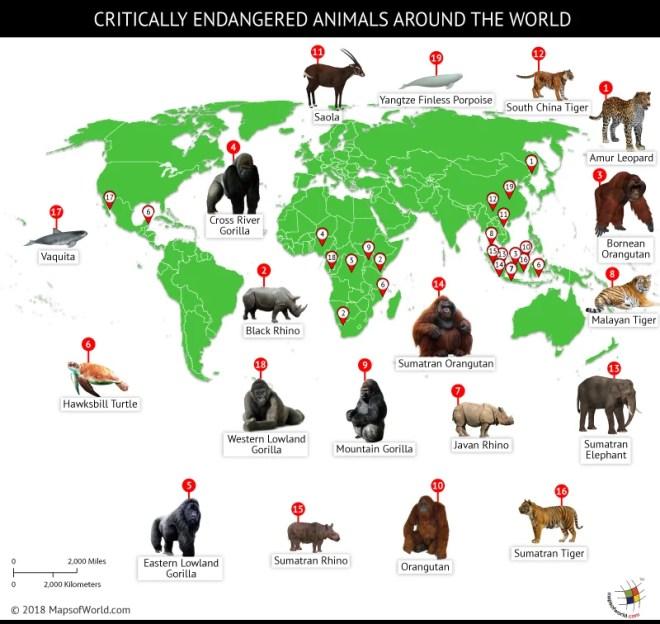 world's most endangered species