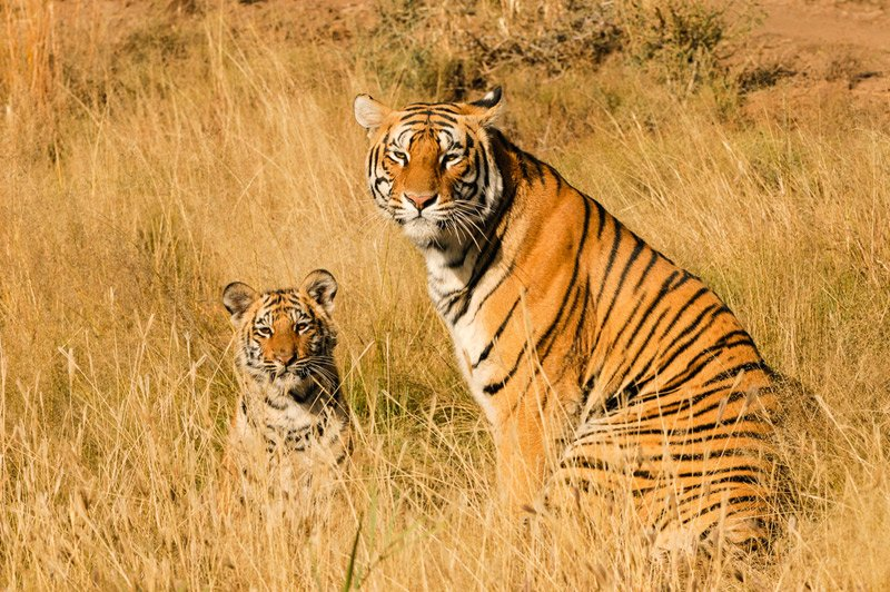 Image result for Valmiki Wildlife Sanctuary-