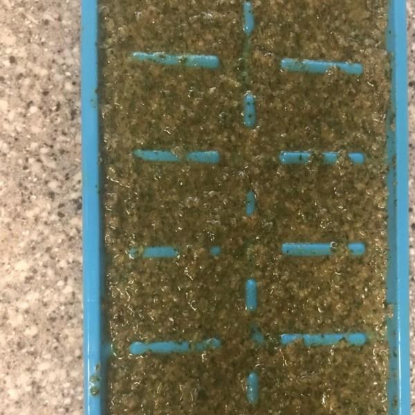 Pesto de nozes de alho assado para receita de congelamento
