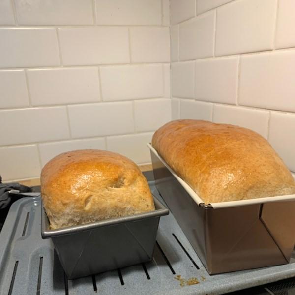Receita simples de pão de trigo integral