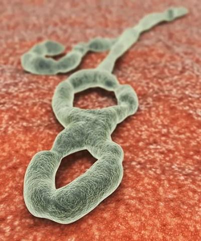 Image result for ebola virus