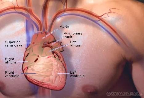detail heart3