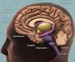 Quick Guide to Dementia