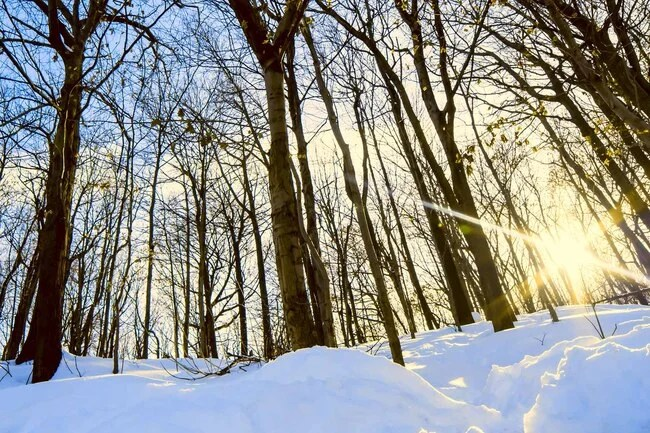 Doctors think less sunlight at certain times of year can trigger your body to change the way it makes and uses certain key brain chemicals.