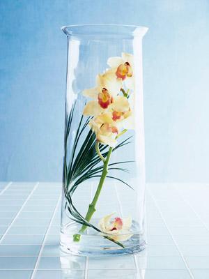 twist orchids
