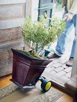 Moving Houseplant