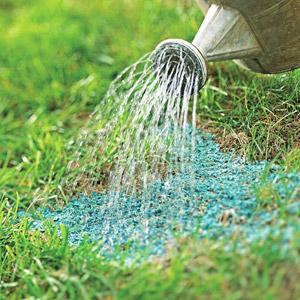Watering mulch seeding patch
