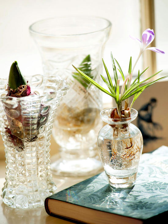 HowTo Force Hyacinth Bulbs In A Vase