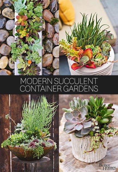 modern succulent garden ideas Modern Succulent Container Gardens