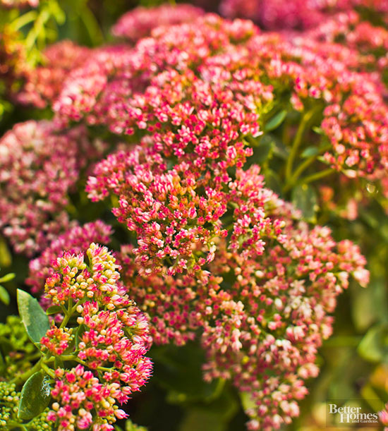 Low-Maintenance Perennials of the Mountain West
