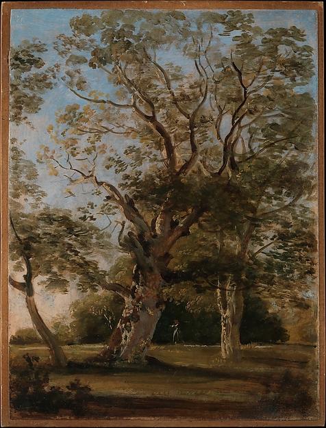 Beech Trees in the English Garden, Munich