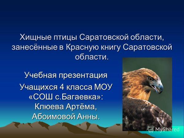 Хищные Птицы Смоленской Области Фото С Названиями