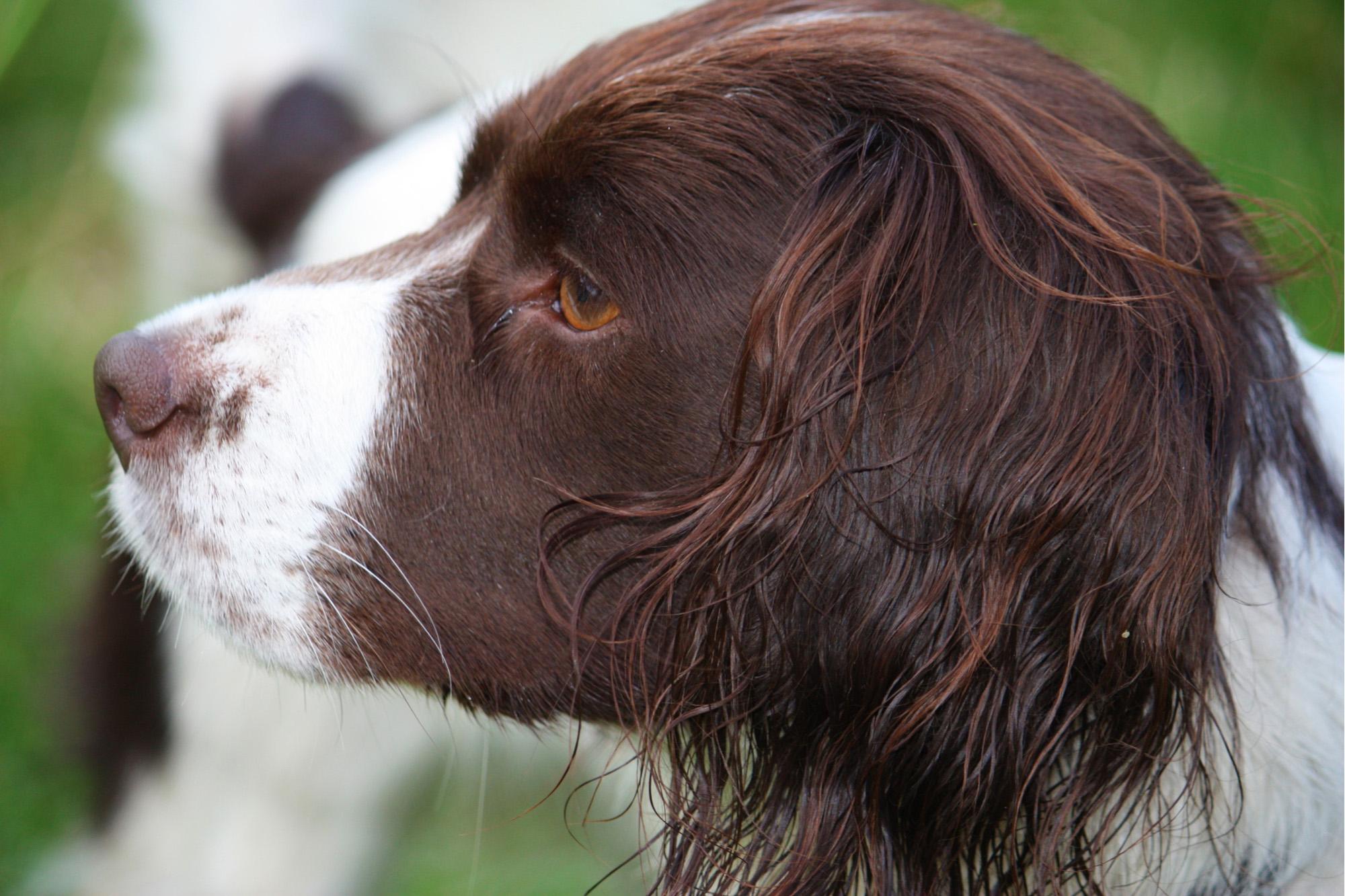 Worksheet Animal Senses