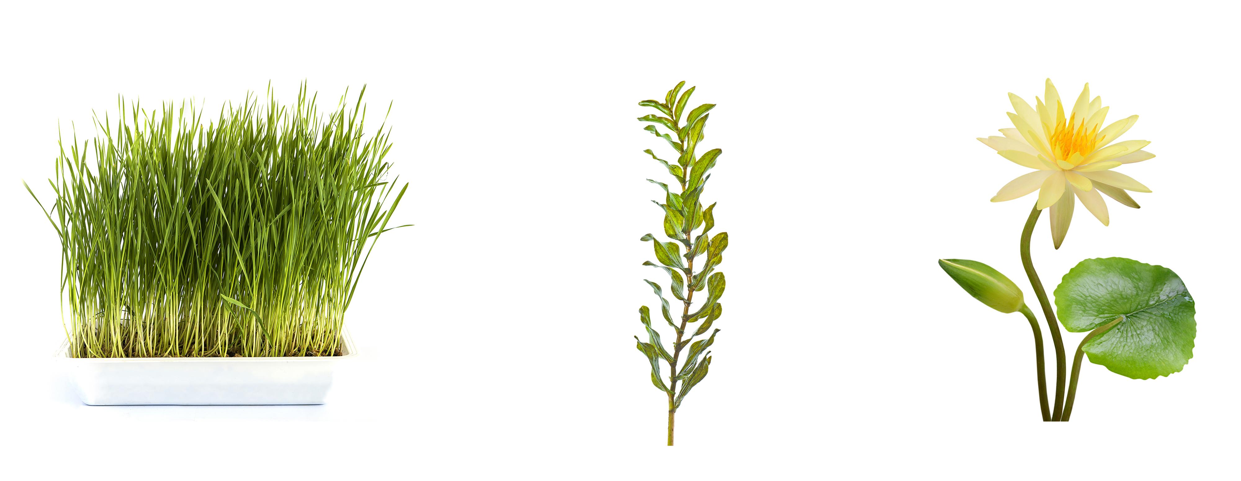Worksheet Classification Of Plants