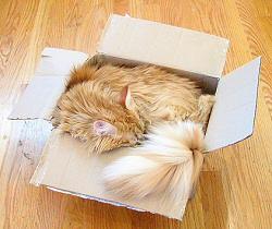 I'mmmmm the caaaaat in the box...