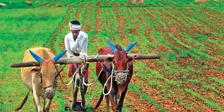 Cabinet approves plan to bring 11 agricultural schemes under one     Image for representational purpose only