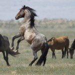 Drought Poses Threat To Usa S Wild Horses The New Indian Express