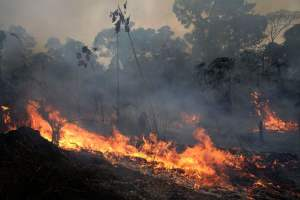 Image result for amazon wildfire