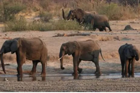 Boasting World's Largest Elephant Population, This Country's Over 300 Pachyderms Killed by 'Bacteria'