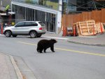 More Young Bears, Less Food Send Them To Juneau's Garbage