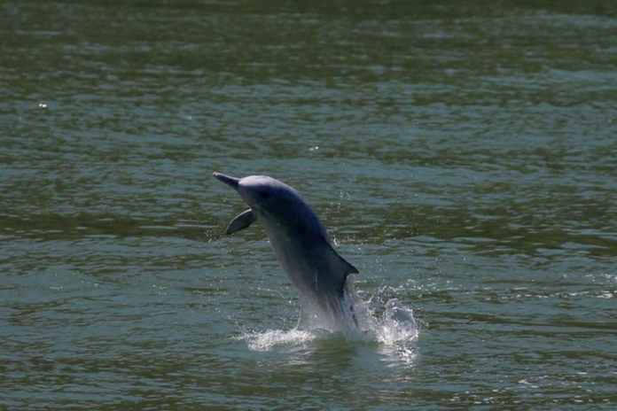 Two More Dolphin Carcasses Spotted in Mumbai as Number of Deaths Pile Up Over the Years | Latest News Live | Find the all top headlines, breaking news for free online April 30, 2021