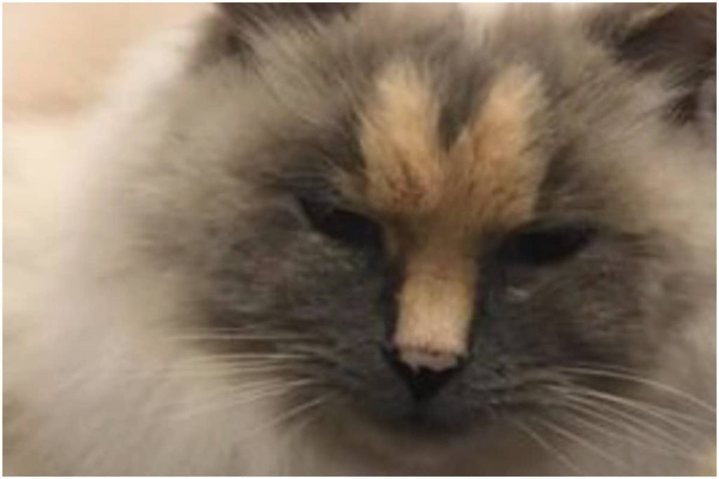 Couple Faces Flak for Naming their Cat 'Dick' Because of Penis-like Mark on Face