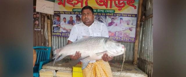 मछली बाजार के मालिक चंदू ने सबसे ज्यादा कीमत पर मछली खरीदी।  उसे उम्मीद है कि वह कम से कम डेढ़ हजार रुपये प्रति किलो बिक पाएगा।  चंदूर का दावा है कि मछली खरीदने के लिए पहले से ही अलग-अलग जगहों से खरीदार आ रहे हैं।  मछली स्टोर कीपर चंदू ने बताया कि मछली खरीदने के लिए अलग-अलग जगहों से ग्राहक आने लगे हैं.