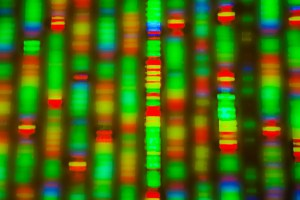 A genome sequenced