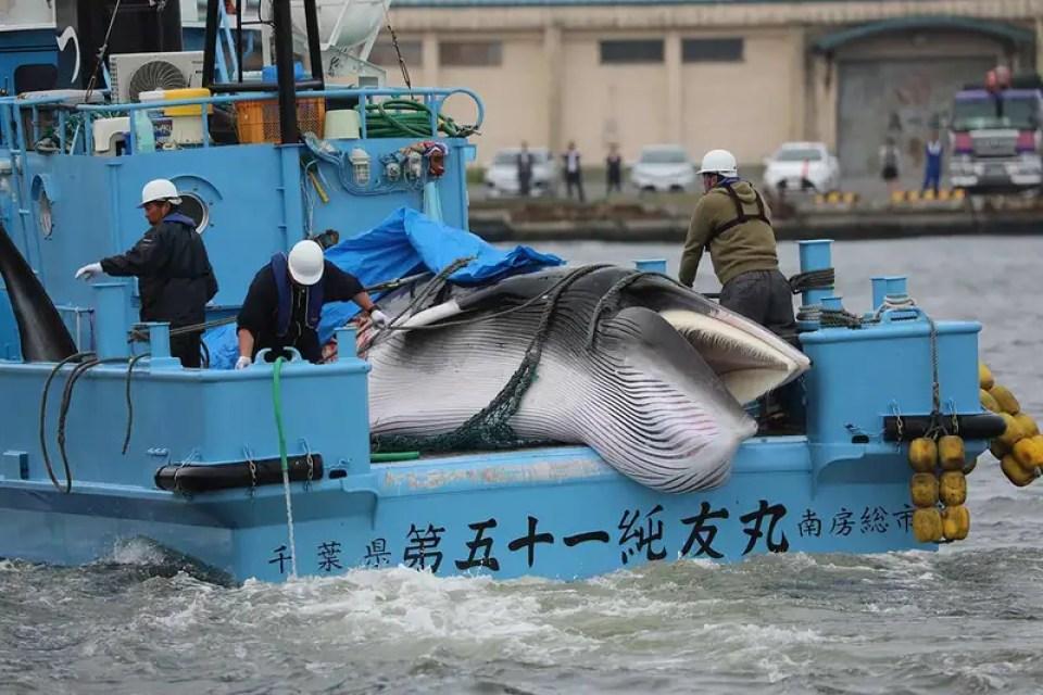 """Résultat de recherche d'images pour """"japan whaling 2019"""""""