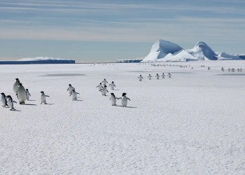 Emperor penguins could go extinct by 2100 if we fail on climate change