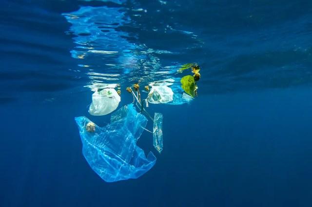 Plastic Bags In Water