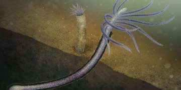 Weird worm is earliest known animal to evolve away body parts