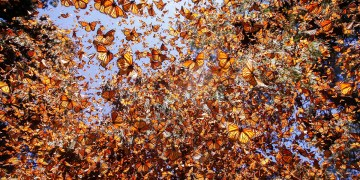 Butterflies are showing us how wildlife will cope with climate change
