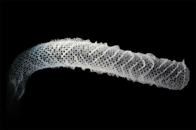 Superstrong sea sponge could help build better spacecraft