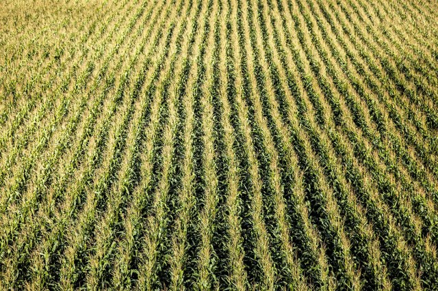 Why monocultures aren't nearly as bad as you may think