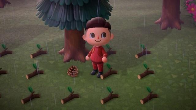 Animal Crossing New Horizons Pine Cone