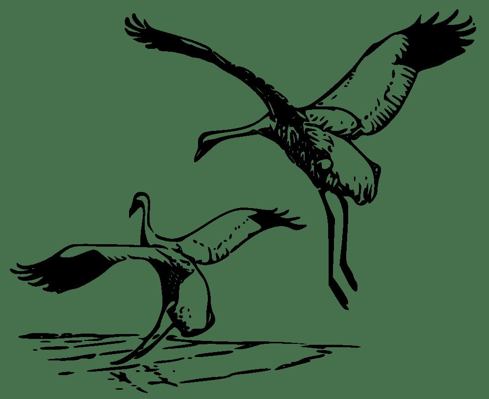 OnlineLabels Clip Art Whooping Crane 2
