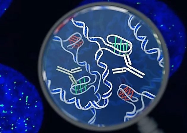 Scientists identify new 'twisted knot' DNA structure in human cells