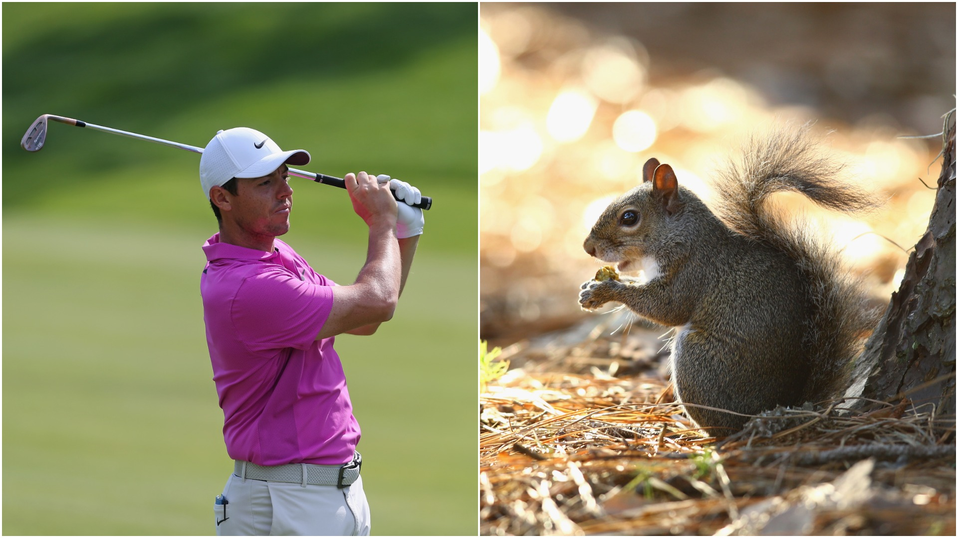McIlroySquirrel-Cropped
