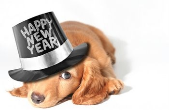 Image result for new year dogs