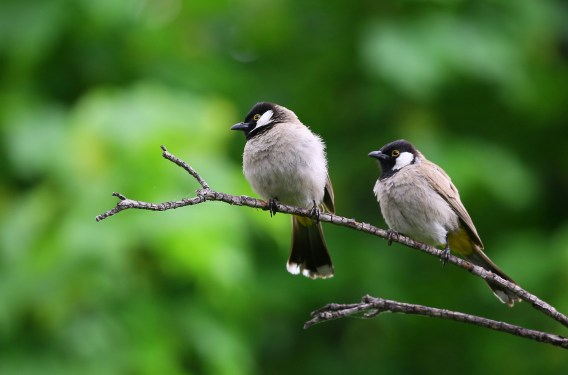 White and Black Birds Piercing on Tree Branch