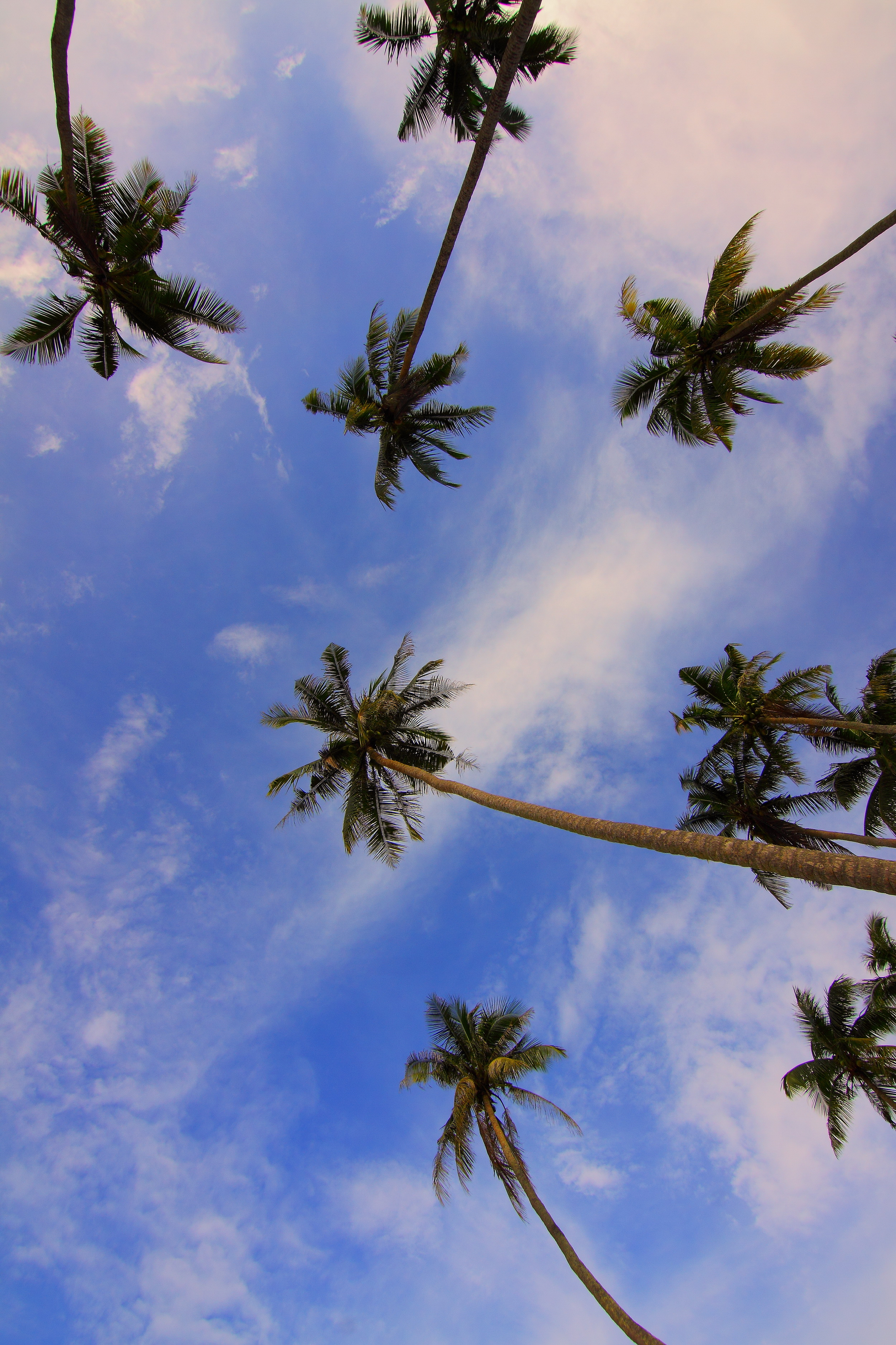 Palm Trees At Sunset 183 Free Stock Photo