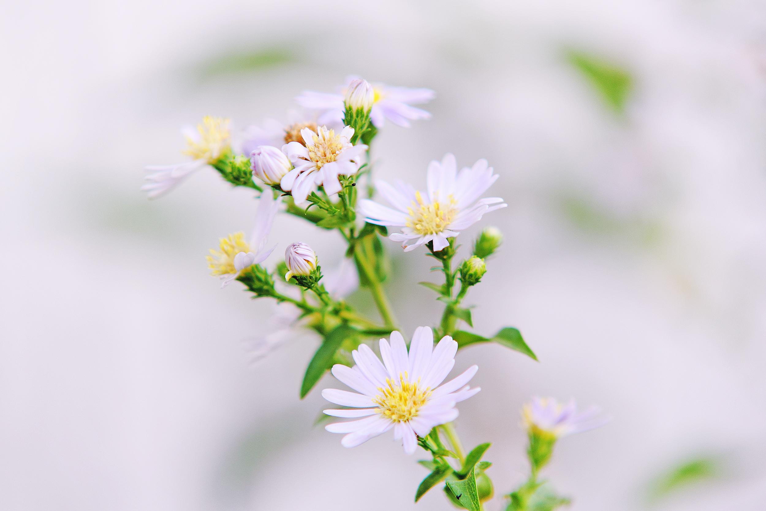 Pink Flower Field Free Stock Photo