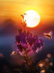 api, colori, esterno