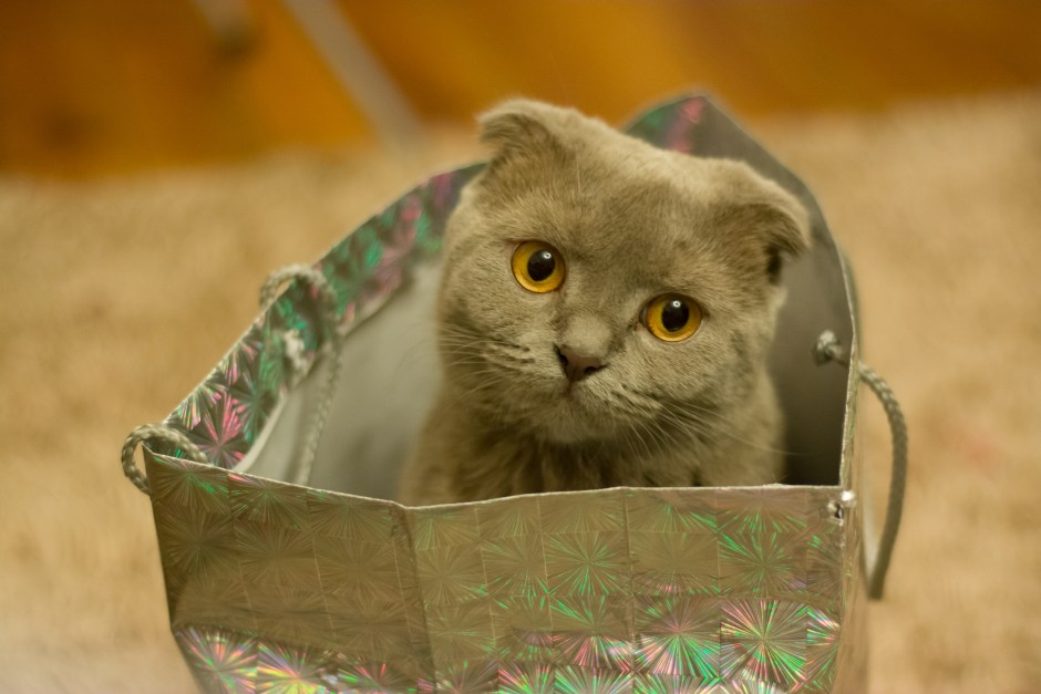 Kitten travelling light
