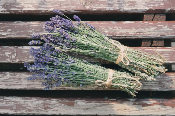 bunches of lavendar