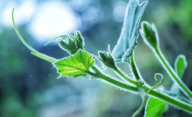 Free stock photo of biology, botany, growing plant