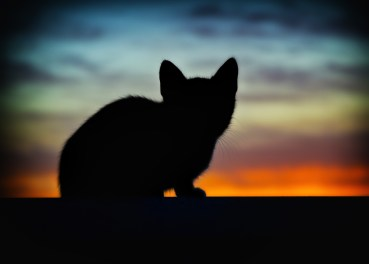 Silhouette of Cat Under Orange Sunset