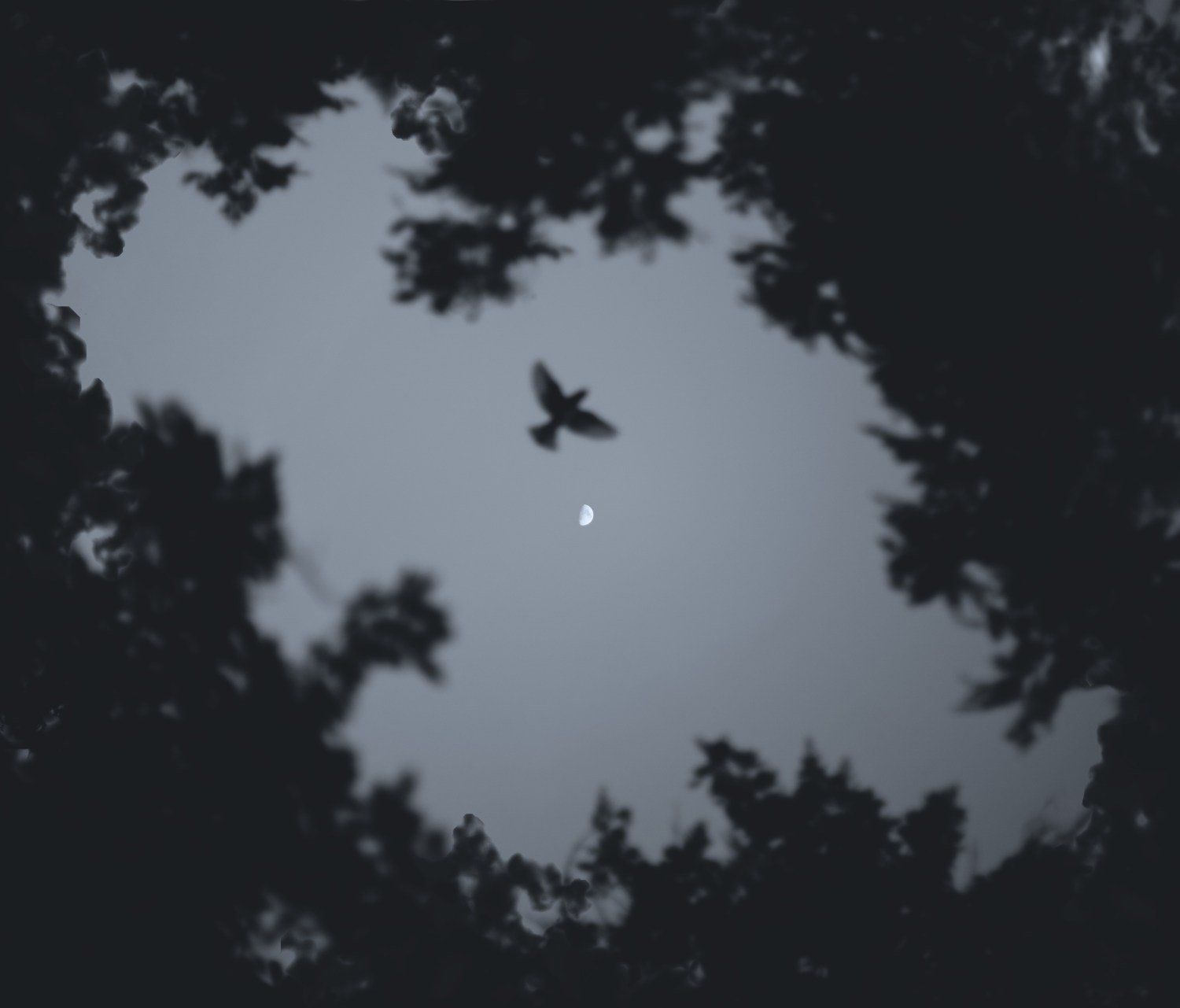 Low Angle Photo of Bird Flying during Night