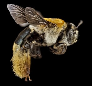 ali, ape, bellissimo